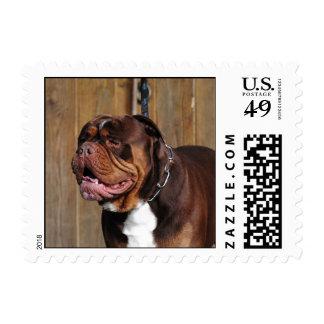 beautiful breed dog renascence bulldog postage stamp