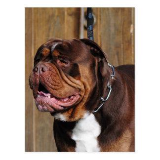 beautiful breed dog renascence bulldog postcard