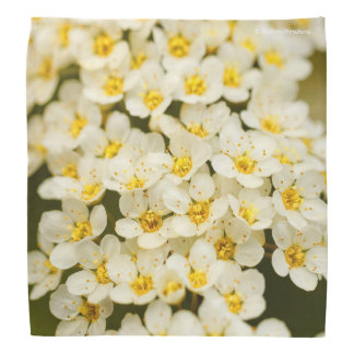 Beautiful Bridal Wreath Spiraea Bandana