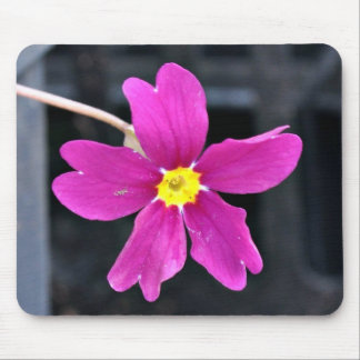 Beautiful Bright Pink Flower Mouse Pad