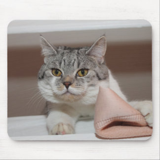 Beautiful British Shorthair Tomcat Mouse Pad