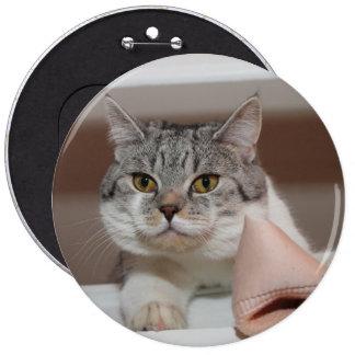Beautiful British Shorthair Tomcat Pinback Button