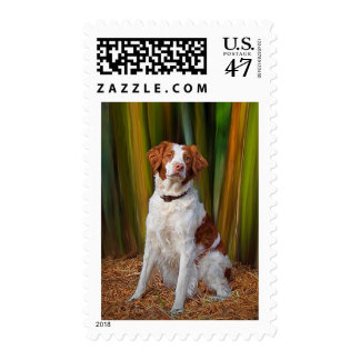 Beautiful Brittany US Postage Stamp