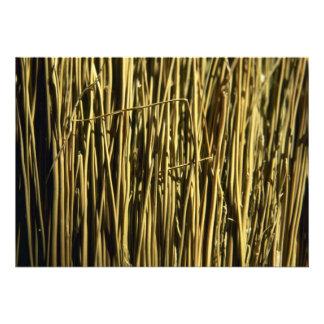 Beautiful Broom Bristles Invites
