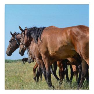 Beautiful Brown Bay Horses Acrylic Wall Art