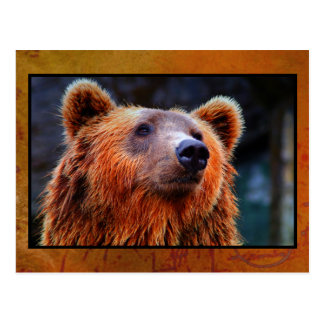 Beautiful Brown Bear Portrait Wildlife Photo Postcard