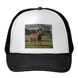 Beautiful brown colored horse running in field hat