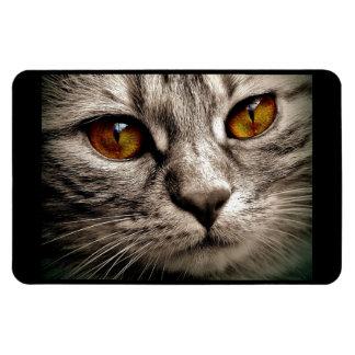 Beautiful Brown Eyed Gray Tiger Cat Flexible Magnet