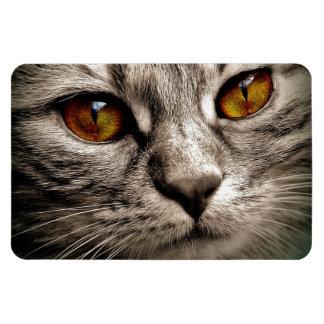Beautiful Brown Eyed Gray Tiger Cat Magnet