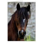 Beautiful Brown Horse Card