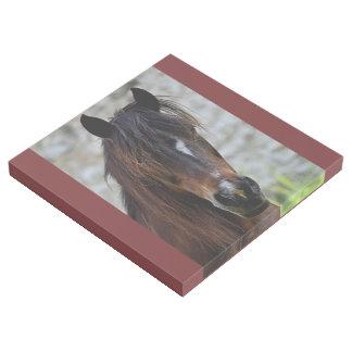 Beautiful Brown Horse Gallery Wrap