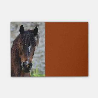 Beautiful Brown Horse PostIt Notes