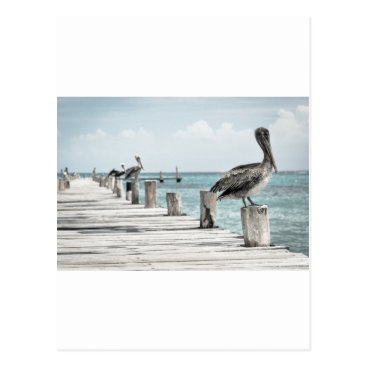 Beach Themed Beautiful Brown Pelicans and Blue Water Postcard