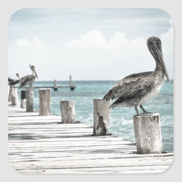 Beach Themed Beautiful Brown Pelicans and Blue Water Square Sticker