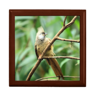Beautiful Brown Speckled Mousebird Africa Bird Keepsake Box