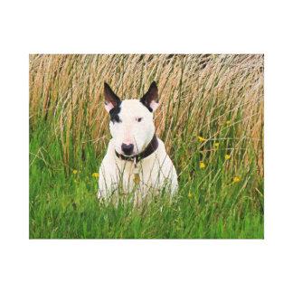 Beautiful Bull Terrier Canvas Print