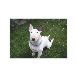 Beautiful Bully English Bull Terrier Canvas
