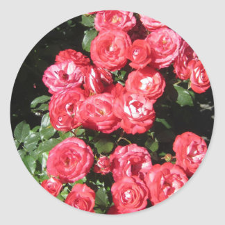 Beautiful Bunch of Red Roses Classic Round Sticker