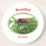 Beautiful But Deadly Cow Killer Wasp Beverage Coaster