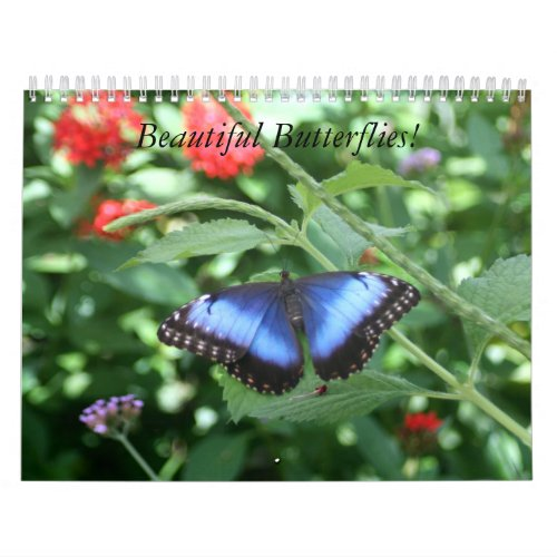 Beautiful Butterflies Calendar