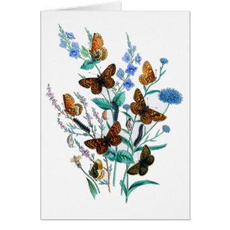 Beautiful Butterflies Card