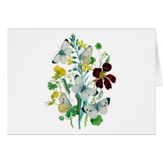 Beautiful Butterflies Cards