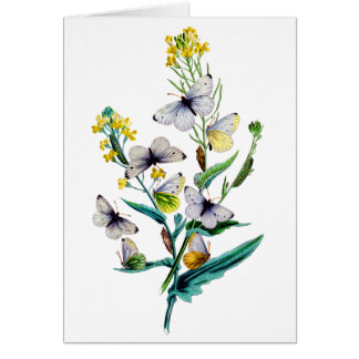 Beautiful Butterflies Greeting Cards