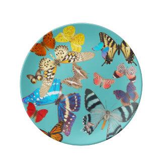 Beautiful Butterflies on Blue Plate