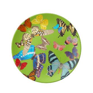 Beautiful Butterflies on Green Dinner Plate