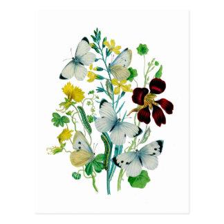 Beautiful Butterflies Post Card