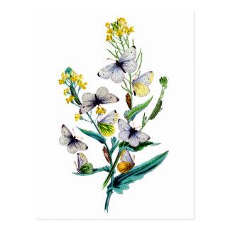 Beautiful Butterflies Postcard