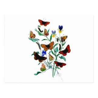 Beautiful Butterflies Postcards