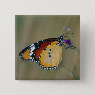 Beautiful butterfly and lifes nectar button