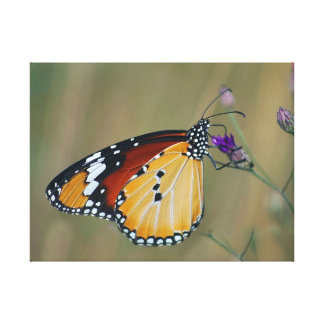 Beautiful butterfly and lifes nectar canvas print