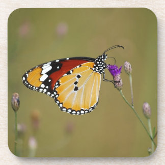 Beautiful butterfly and lifes nectar drink coasters