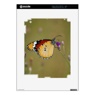 Beautiful butterfly and lifes nectar iPad 2 decals