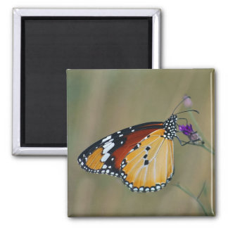 Beautiful butterfly and lifes nectar 2 inch square magnet