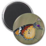 Beautiful butterfly and lifes nectar refrigerator magnet