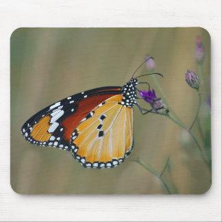Beautiful butterfly and lifes nectar mouse pad