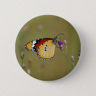 Beautiful butterfly and lifes nectar pinback button