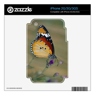 Beautiful butterfly and lifes nectar iPhone 3 decals