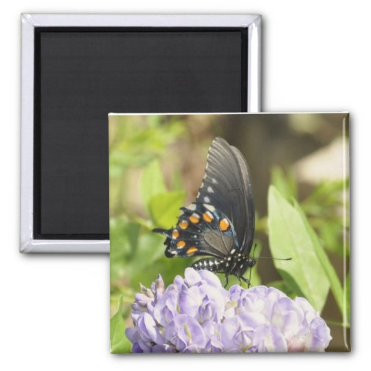 Beautiful Butterfly and Purple Flower Magnet
