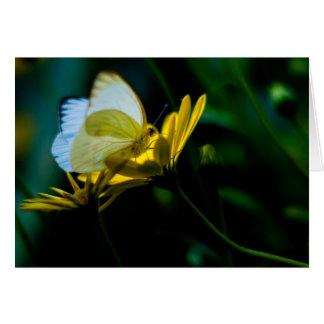 Beautiful Butterfly Blank Notecard