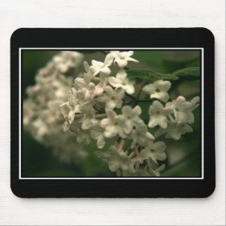 Beautiful Butterfly Bush Mouspad! (with border) Mouse Pad