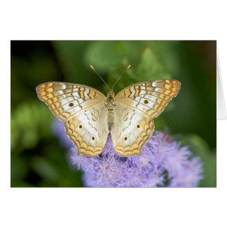 """Beautiful Butterfly"" Card"