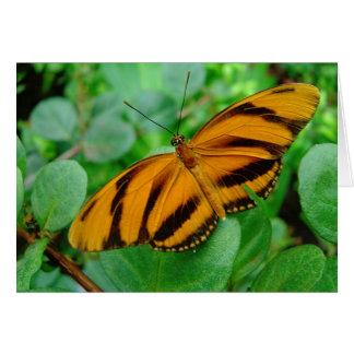 Beautiful Butterfly Card