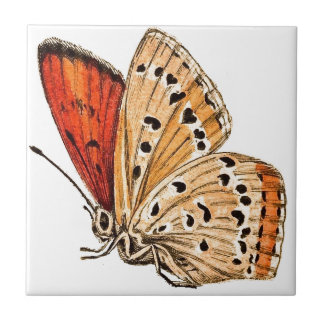 Beautiful Butterfly Ceramic Tile
