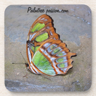 beautiful butterfly coaster
