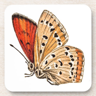 Beautiful Butterfly Drink Coaster