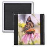 Beautiful Butterfly Fridge Magnets
